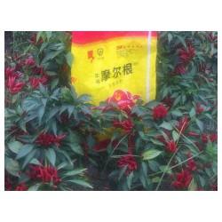 业的辣椒用肥批发商,当属摩尔根生态农业科技,安徽辣椒用菌肥厂家
